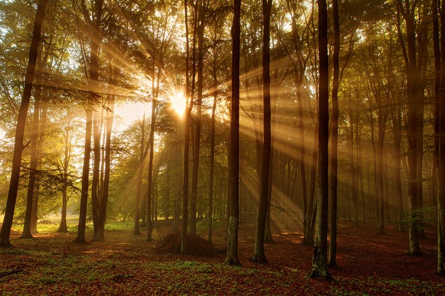 04-Lumina-padurii-de-la-Lacul-Sf.-Ana