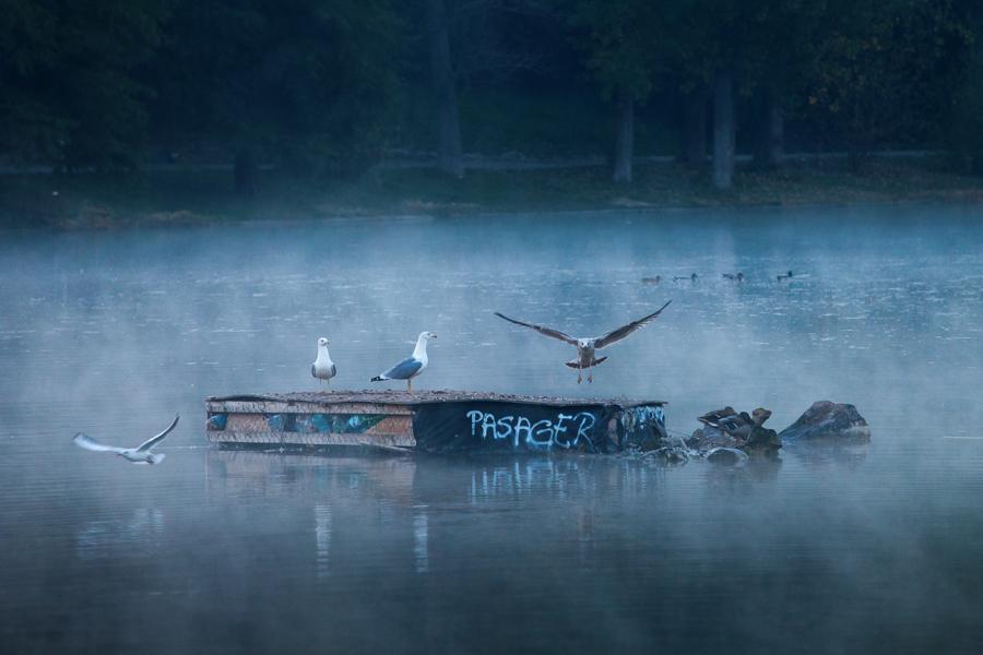 30 - Pasager (Lacul Tineretului)